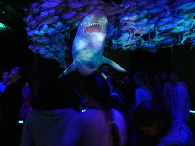 straszny rekin w HYDROPOLIS